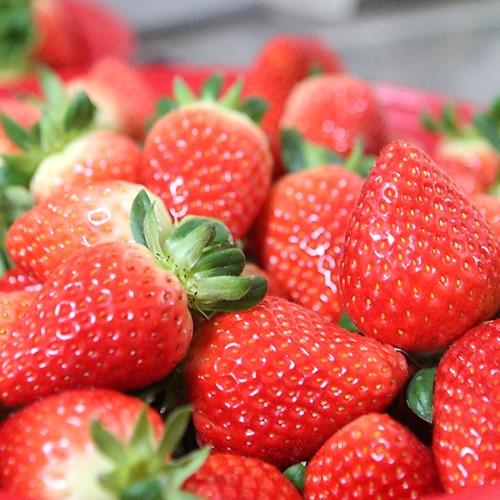 유기농러브팜 첫사랑 딸기 1kg, 2kg