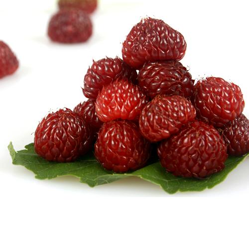 유기농 산딸기(급냉) 2.5kg, 5kg, 10kg